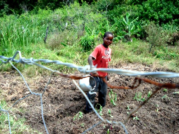 mpho watering seedling
