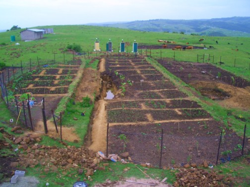 Clay pathways, 2 dams and trees being planted