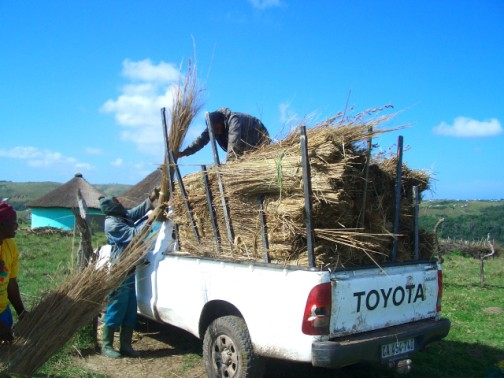 To thatch this classroom requires 20 truck loads of thatch!